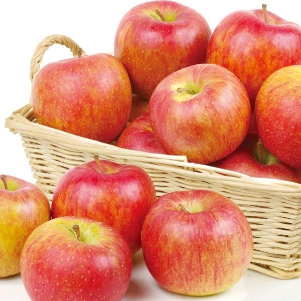 りんご 青森産 北斗 5kg 1箱 送料無料 食品 国華園