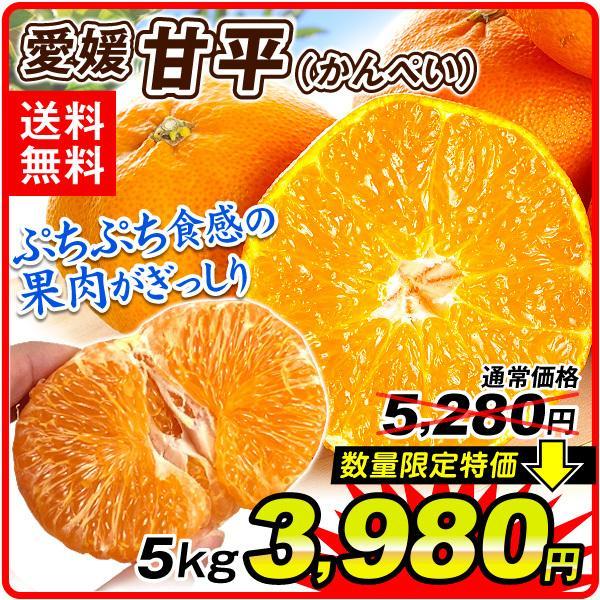 みかん 愛媛産 甘平 5kg 1組 送料無料 食品 国華園