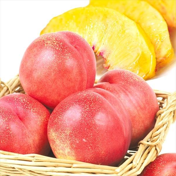 青森産 ネクタリン 4kg 1箱 冷蔵便 送料無料 食品 国華園