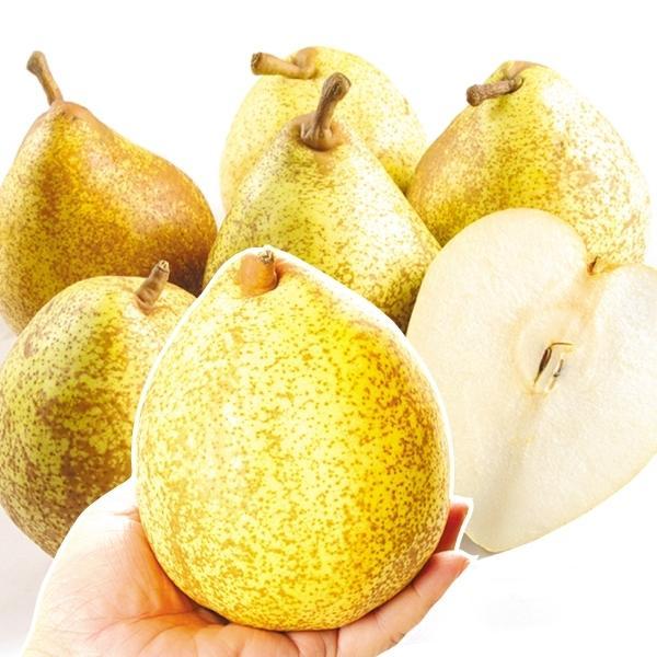 梨 山形産 ゼネラルレクラーク 5kg 1箱 送料無料 食品 国華園