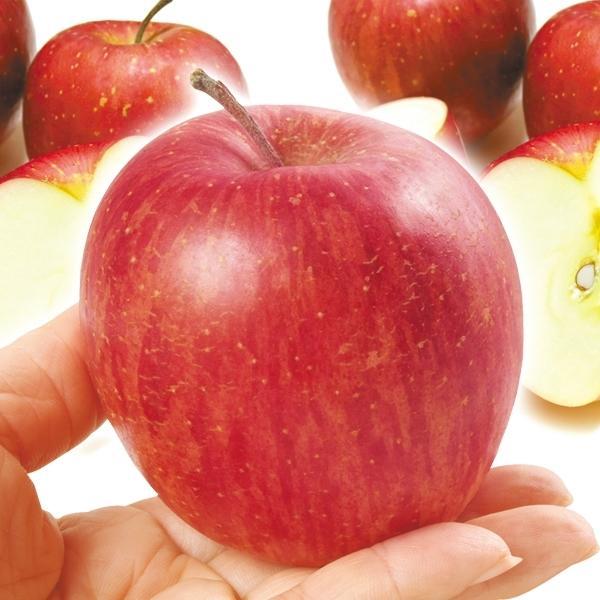 りんご 青森産 ちびふじ 10kg 1箱 送料無料 食品 国華園