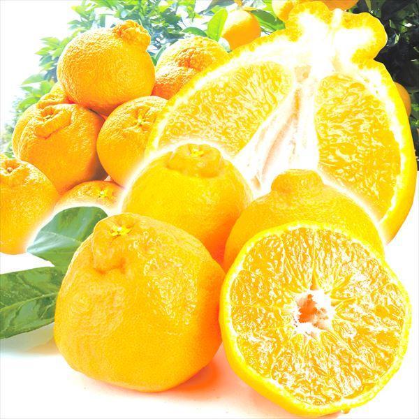 みかん 熊本産 ご家庭用 不知火オレンジ 5kg 1箱 送料無料 食品 国華園