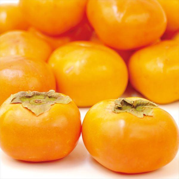 訳あり庄内柿
