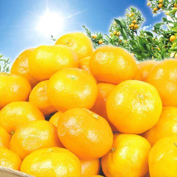 柑橘 和歌山産 有田の日光にこにこみかん 5kg ご家庭用 送料無料 食品