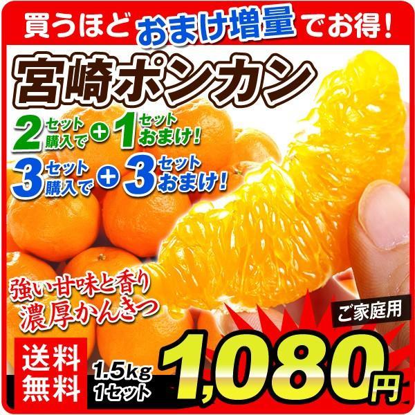 宮崎ポンカン1.5kg