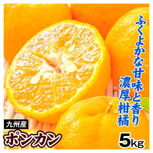 みかん 九州産 ご家庭用 ポンカン 5kg 1組 送料無料 食品 国華園