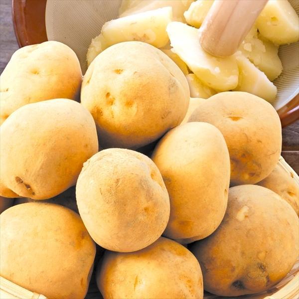 じゃがいも 北海道産 男爵いも 20kg 1組 送料無料 食品 国華園