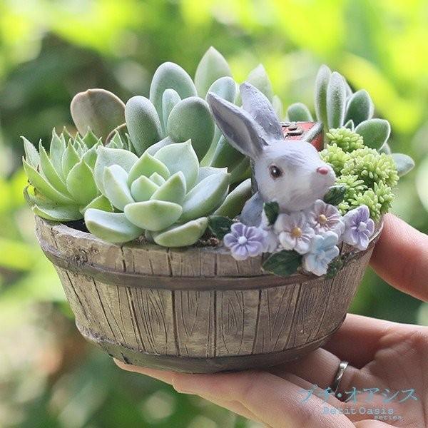 鉢 植木鉢 ポリ製 多肉植物 寄せ植え かわいい プチオアシス・ウサギのお庭 1個 女性 プレゼント 国華園|kokkaen