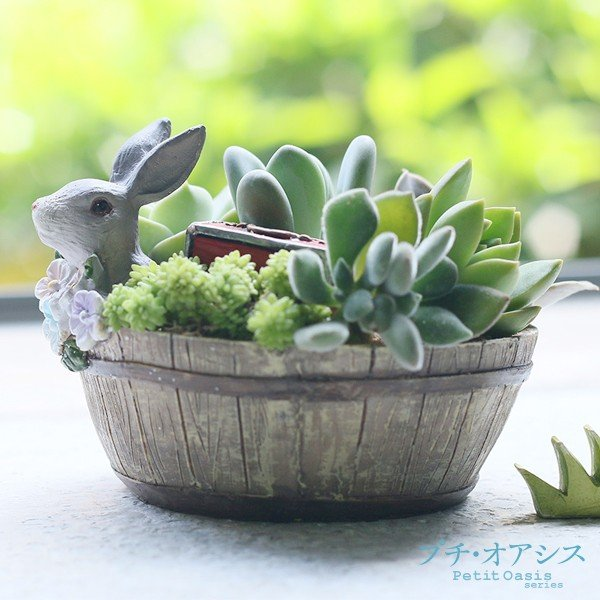 鉢 植木鉢 ポリ製 多肉植物 寄せ植え かわいい プチオアシス・ウサギのお庭 1個 女性 プレゼント 国華園|kokkaen|02