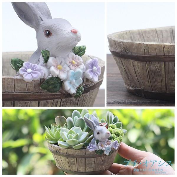 鉢 植木鉢 ポリ製 多肉植物 寄せ植え かわいい プチオアシス・ウサギのお庭 1個 女性 プレゼント 国華園|kokkaen|03