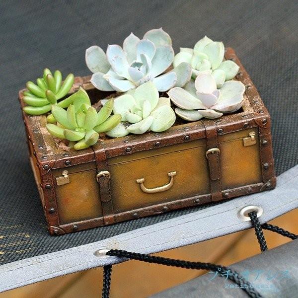 鉢 植木鉢 ポリ製 多肉植物 寄せ植え かわいい プチオアシス・宝石箱 1個 女性 プレゼント 国華園|kokkaen