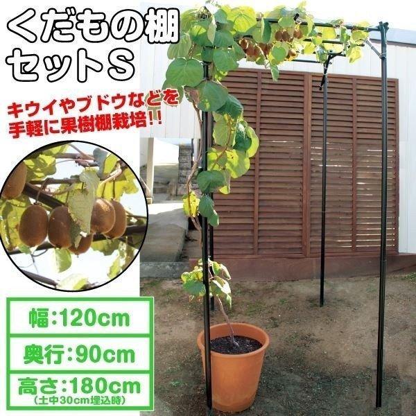 くだもの棚セットS 1台 藤棚 パーゴラ 果樹棚 ブドウ キウイ 国華園