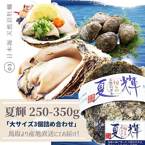 天然岩牡蠣 (活)夏輝牡蠣 300g-400g前後(大サイズ) 3個セットブランド 夏輝牡蠣 鳥取産 カキ 刺身用 送料無料(岩ガキ/岩がき)
