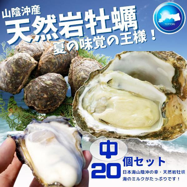 天然岩牡蠣 (活) 牡蠣 200g-300g前後 20個セット 鳥取産 岩牡蠣 カキ 刺身用 (岩ガキ/岩がき) 送料無料
