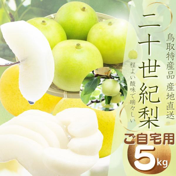 鳥取県産 二十世紀梨 (優品)ご自宅用 5kg詰 梨 (L-3L 12-18個)  2箱以上お買い上げでもう1箱分5kgプレゼント  ご自宅用 梨 送料無料