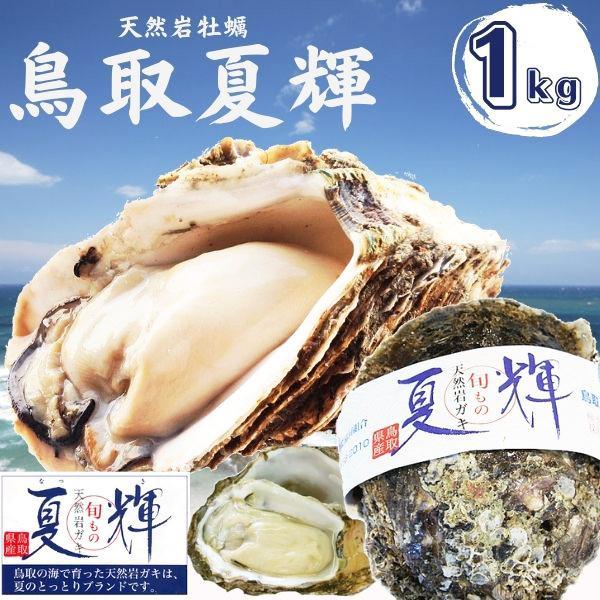 天然岩牡蠣 (活)夏輝牡蠣 1kgセット(3-5個) ブランド 夏輝牡蠣 鳥取産 カキ 刺身用 送料無料(岩ガキ/岩がき)