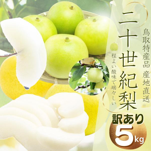 鳥取県産 (ご自宅用 訳あり) 二十世紀梨 5kg(L-3L12-18個前後 )梨 ご自宅用 梨 2箱以上お買い上げでもう1箱分5kgプレゼント 送料無料