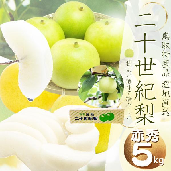 鳥取県産 二十世紀梨(ご贈答用)5kg詰 梨(L-5L  10-19玉前後入)赤秀   送料無料