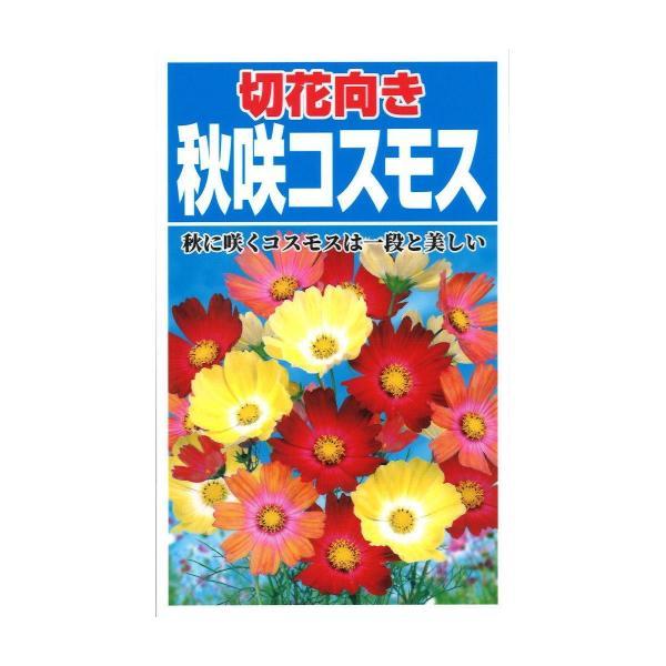 切花向き秋咲きコスモス 5個セット
