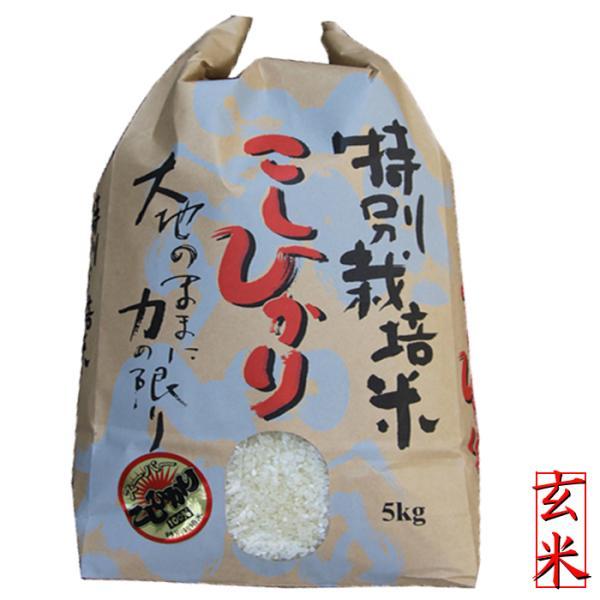 特別栽培米 新潟産 コシヒカリ 玄米5kg (5kg×1袋)  特A 高級米 令和2年 コシヒカリ玄米 お米 新潟県産こしひかり  5キロ玄米