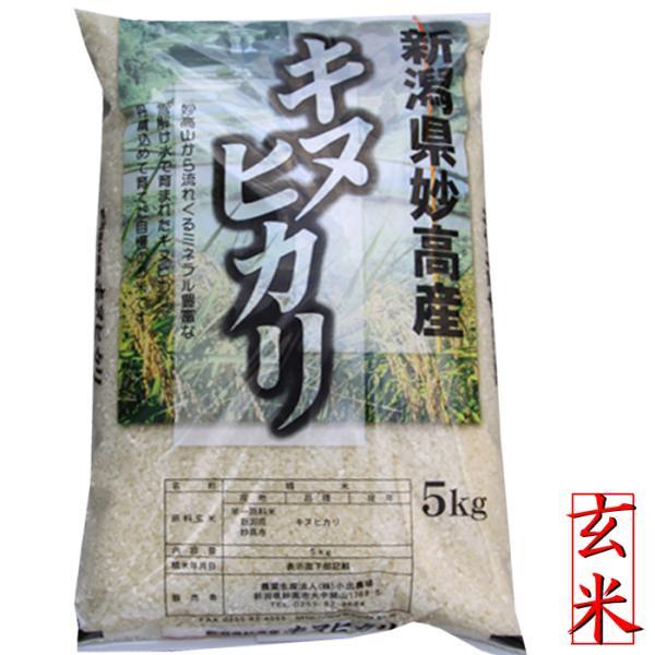玄米5kg新潟県産キヌヒカリ5kg 玄米5キロ 令和2年玄米5キロ安いお米農家直送キヌヒカリ玄米お買い得米お得米