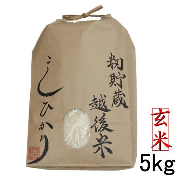 籾貯蔵・越後米コシヒカリ5kg玄米 玄米 新潟県産 お米 令和2年 新潟県産こしひかり 美味しいお米 玄米5kg コシヒカリ5キロ玄米