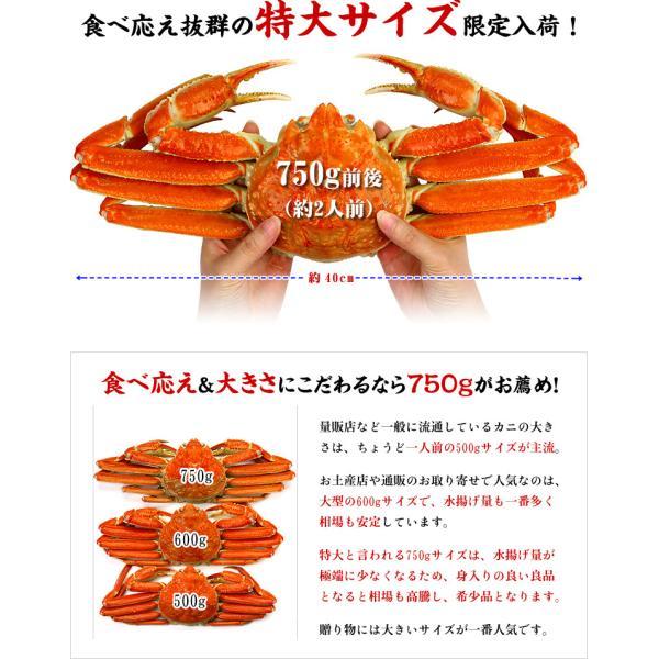 ズワイガニ カニ かに 蟹 ボイルずわい蟹 姿 750g前後×4尾入 特大サイズ|kouragumi|02