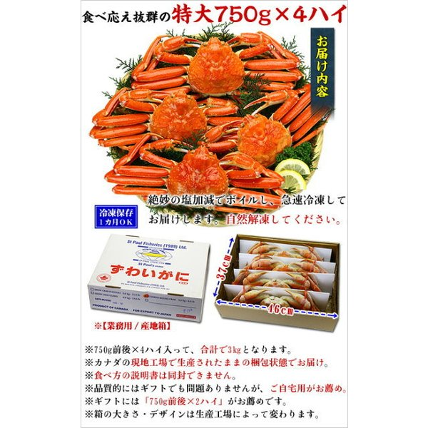 ズワイガニ カニ かに 蟹 ボイルずわい蟹 姿 750g前後×4尾入 特大サイズ|kouragumi|04