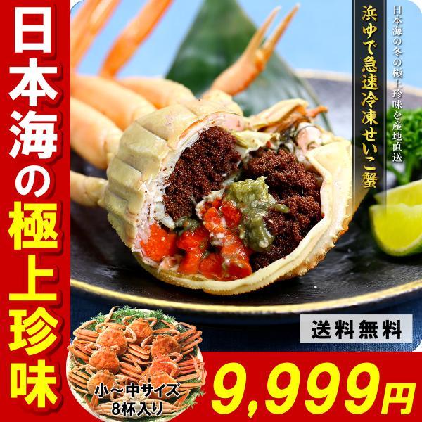 セイコガニ  「急速冷凍」越前/松葉せいこ蟹(小〜中サイズ×8尾入り/約3人前)※足折れが混じる場合があります|kouragumi