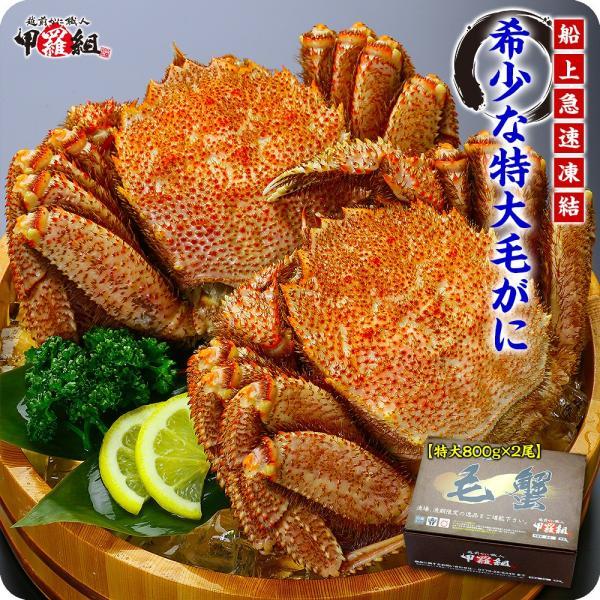 かに カニ 蟹   特大 毛がに 姿 800g前後×2尾 ボイル  化粧箱 食べ方説明書付き |kouragumi