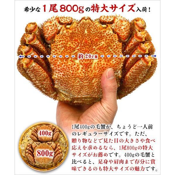 かに カニ 蟹   特大 毛がに 姿 800g前後×2尾 ボイル  化粧箱 食べ方説明書付き |kouragumi|02