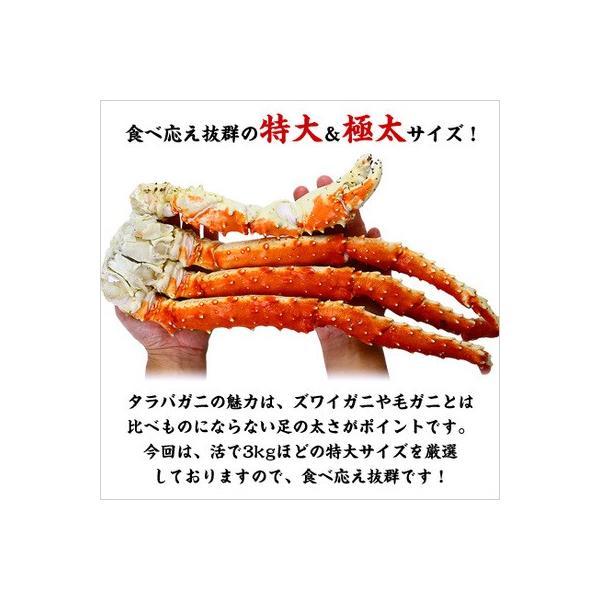 カニ かに 蟹 タラバガニ 特大 極太 たらばがに 足 1kg 1肩 シュリンク包装|kouragumi|02