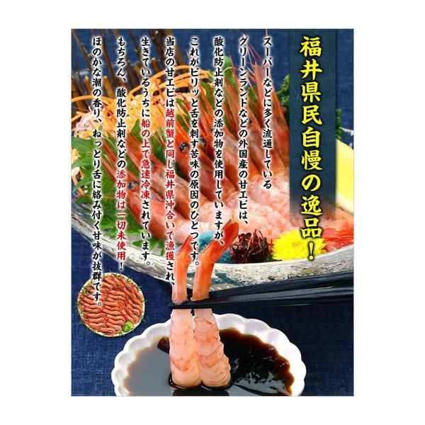 エビ 甘エビ 海老 越前 甘えび(子持ち中サイズ)500g以上 約40尾入 あまえび アマエビ|kouragumi|04