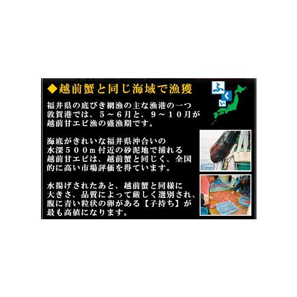 \只今半額セール開催中!/ 子持ち越前甘えび大サイズ500g(30尾前後)送料無料!|kouragumi|02