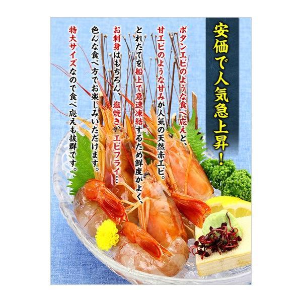 エビ 赤えび 特大サイズ 業務用 2kg(30〜35尾入り)赤エビ あかえび 送料無料|kouragumi|02