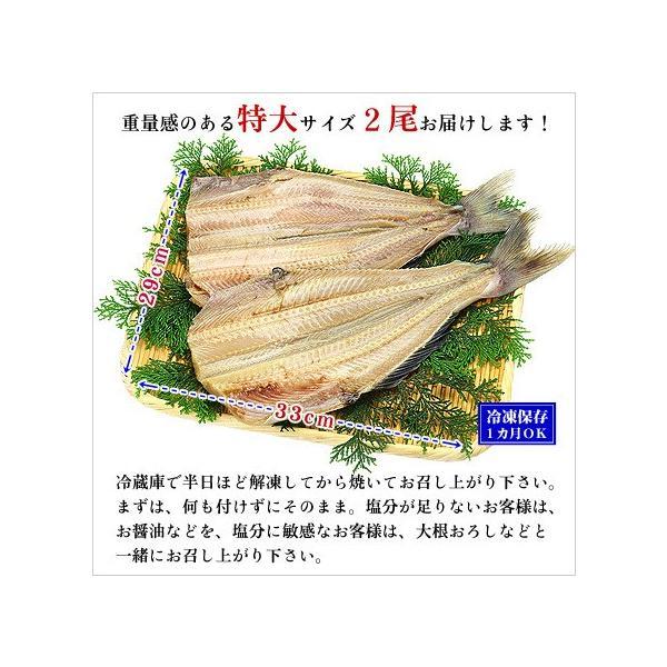 干物 特大 縞ホッケ 干物 2尾セット  実店舗で人気 ほっけ シマ 一夜干し しま ホッケ|kouragumi|02
