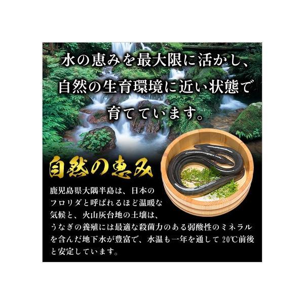 (敬老の日 土用 丑の日) 鹿児島県産 贅沢うなぎ3種食べ比べセット (長蒲焼き約130g×1尾、カットうなぎ蒲焼き50g×1枚、きざみうなぎ60g×1袋)|kouragumi|07