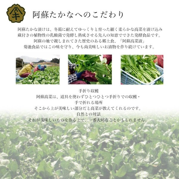 阿蘇たかな漬け 選べる3袋セット 菊池食品 送料無料 油炒め|kousa-youmanzyou|03
