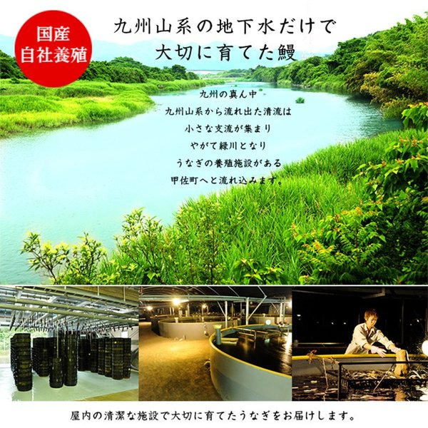うなぎ蒲焼き 国産 鰻 2尾セット(170g×2尾)贈答用 送料無料(離島を除く)|kousa-youmanzyou|02