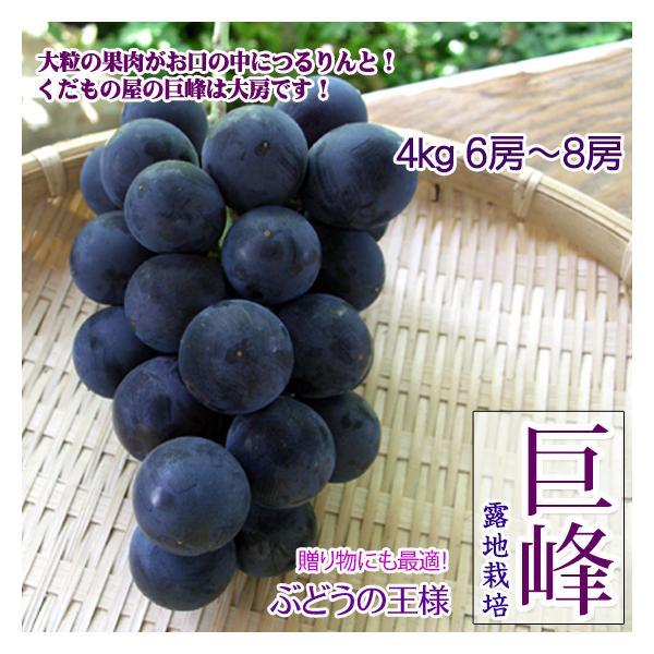 巨峰 4kg6-8房  贈答用 ぶどうの一大産地・長野県 須坂 希少ブドウ