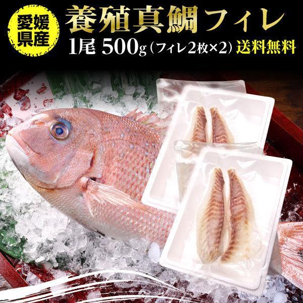 鯛 刺身 フィレ マダイ 真鯛 1尾 フィレ(皮無し)2枚×2 500g 送料無料 海鮮 魚介 冷凍 真空パック Y凍
