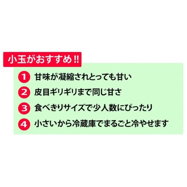 熊本県産 ご自宅用 訳あり 小玉 すいか 2玉 送料無料|kumamoto-gurume|06