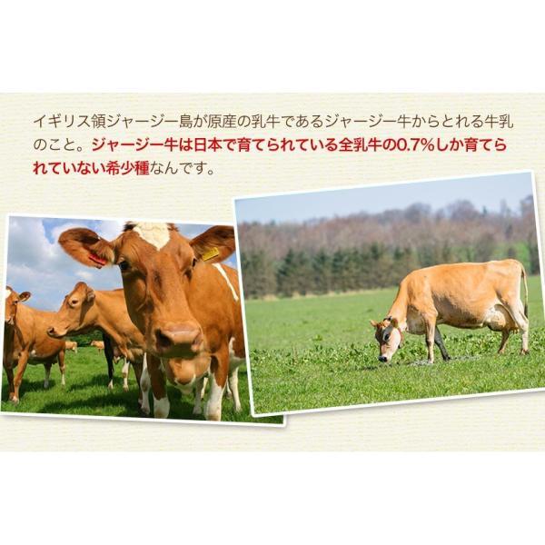 濃厚風味 希少なジャージー牛乳使用 阿蘇ジャージーチーズケーキ1個 2セット以上でおまけ特典 送料無料 3-7営業日以内に出荷(土日祝日除く)|kumamotofood|06