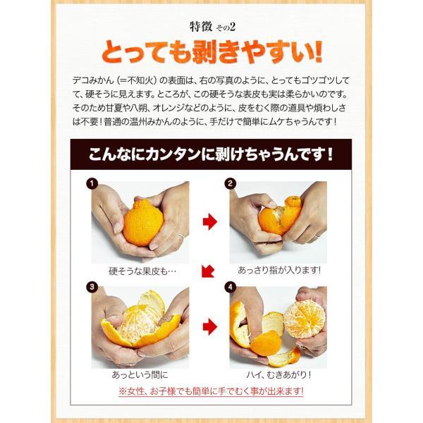 デコみかん 1.5kg 訳あり 送料無料 デコ みかん デコポン 同品種 熊本県産 旬 の みかん 柑橘 産地直送 取り寄せ 箱 3月中旬-3月末頃より順次出荷予定|kumamotofood|19