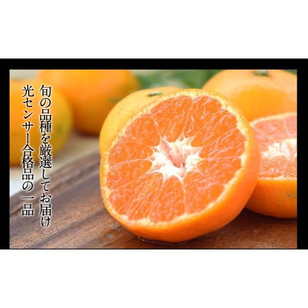 送料無料 マスクメロン/デコポン/みかん/安納芋 お年賀 ギフト 『九州フルーツ盛り合わせ』3月上旬-3月末頃より順次出荷|kumamotofood|10