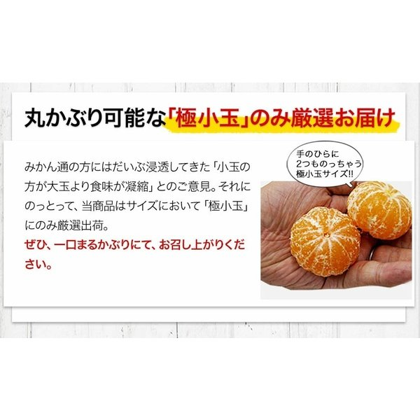 小玉 みかん 2kg 送料無料 2セットで1kgおまけ増量 訳あり 熊本  3-10営業日以内に出荷予定(土日祝日除く) kumamotofood 09