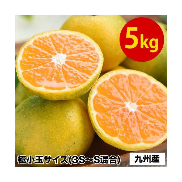 みかん 小玉 5kg 南国の陽蜜 送料無料 3s~s s 3s サイズ 小粒 温州 果物 柑橘 九州 産地直送 食品 品種 9月中旬-10月上旬頃より発送予定