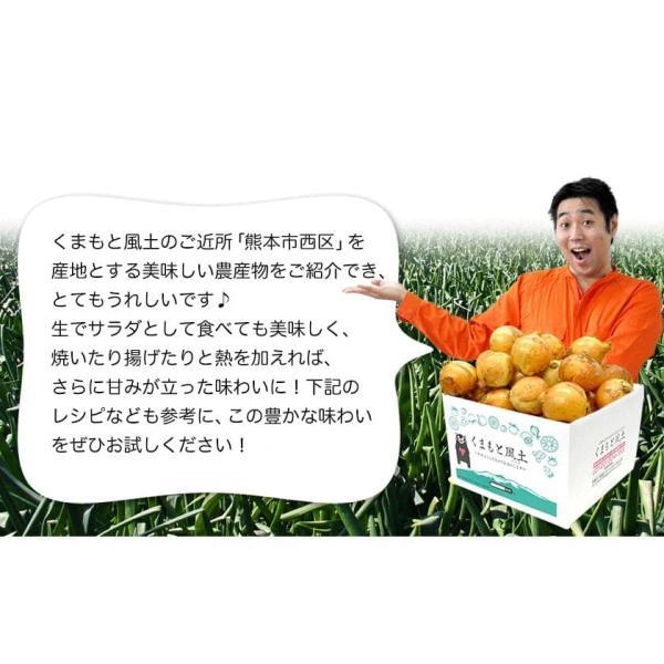 TVで紹介 送料無料 塩たまちゃん 子出藤 (ねでふじ)さんの塩タマネギ 梨のように甘い 熊本県産の新玉ねぎ 1セット1kg 6月中旬-7月上旬頃より順次出荷|kumamotofood|09