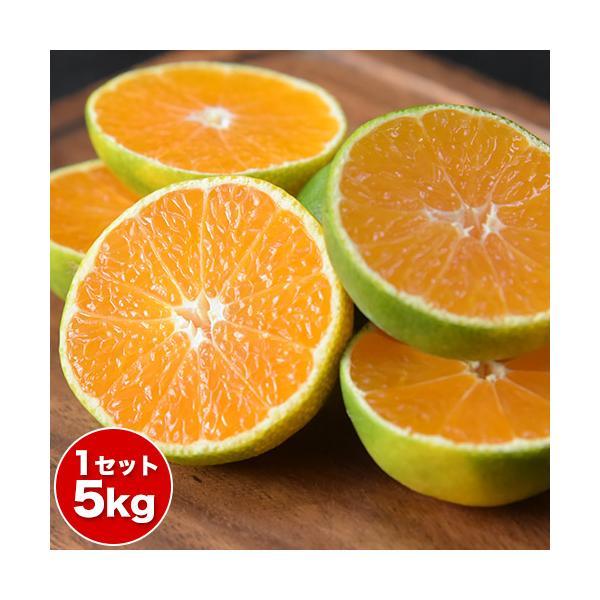 みかん お徳用 5kg ちょっと訳あり 送料無料 果物 フルーツ 訳あり 家庭用 柑橘 熊本 熊本産 もぎたて 9月下旬~10月上旬頃より順次出荷予定