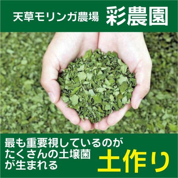 モリンガ サプリ つぶのお茶 徳用箱 30g(250mg×120粒) kumamototuuhan 02